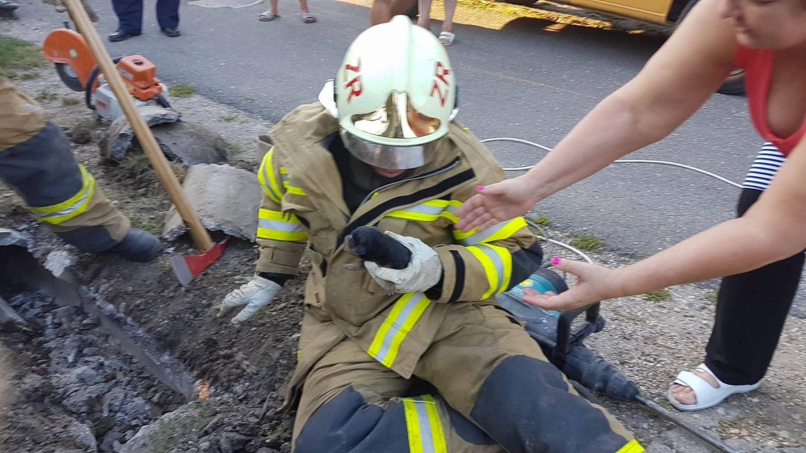 Mi Abonyunk - Állatmentő tűzoltóink afcbc05bbe